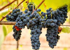 ワイン会 シラー