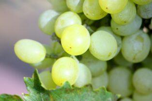オーストラリアワイン④