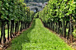 ワインの土壌②