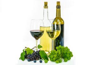 ワインとブドウ②