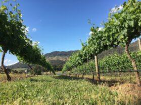オーストラリアワイン①